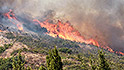 Marijuana farms are blazing in California wildfires